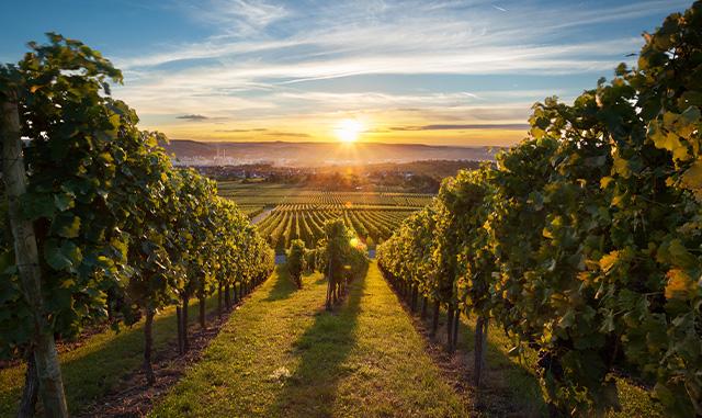 Healdsburg Winery Tour Package
