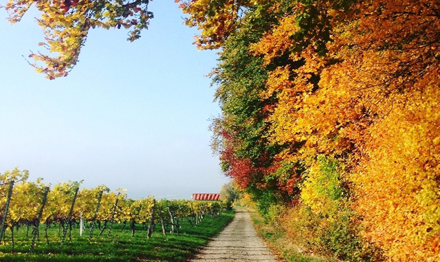Experience Beautiful Fall Foliage In Healdsburg