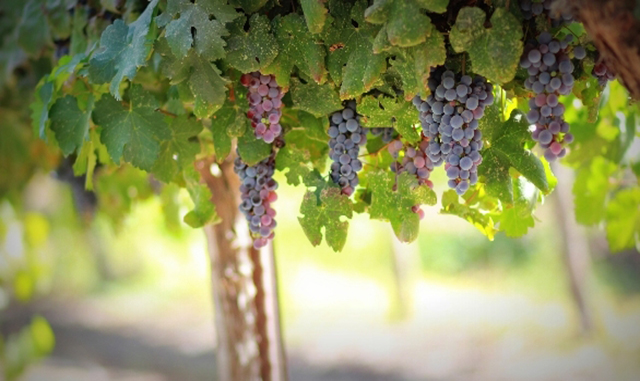 Enjoy a Winery Tour Package in Sonoma County